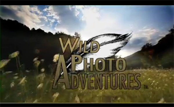 Wild Photo Adventures Screen Shot